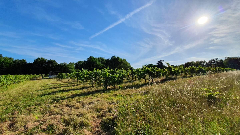 Photo 2 : Terrain constructible à Pomerol (33500)
