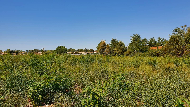 Photo 2 : Terrain constructible à Bourg (33710)